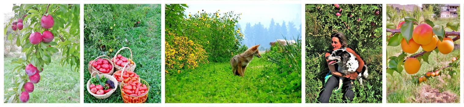 fox in organic permaculture garden fuit